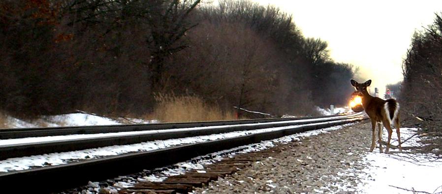 голова оленя и поезд находятся